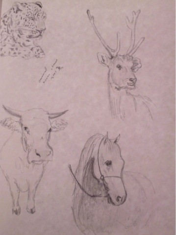 study: animals and nature 1