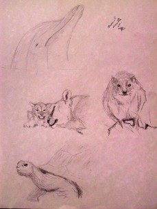 study: animals and nature 4